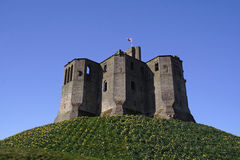Warkworth Castle. Daffodils royalty free stock photos