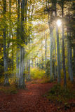 Warm afternoon light in a forest during autumn Stock Images