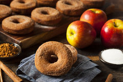 Warm Apple Cider Donuts royalty free stock image