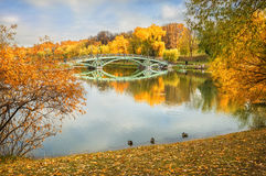 Warm autum. Golden Autumn on the pond and ducks at the shore Stock Images