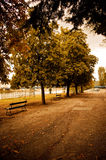 Warm autumn afternoon in park with trees. Autumn scene in small park with yellow warm tone and road in foreground. Trees and empty benches in the distance Royalty Free Stock Photos