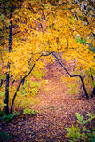 Warm Autumn Forest. Autumn forest path between maple and poplar trees in a sunny day Stock Photos