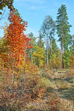 Warm autumn in the forest Stock Photos