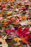 Warm autumn leaves Stock Photography