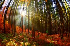 Warm autumn scenery in the forest. With the sun casting beautiful rays of light through the mist and trees stock image