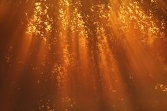 Warm autumn sunbeams. Sunbeams in a foggy morning Stock Image