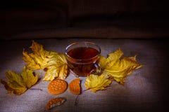 Warm autumn tea. Mug of warm Autumn tea royalty free stock photo