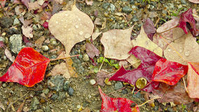 Warm autumn wet leaves Stock Photo