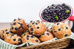 Warm berry muffins with huckleberries Royalty Free Stock Photography