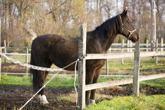 Warm blood purebred horse standing in autumn corral Royalty Free Stock Image