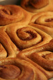 Warm Cinnamon Rolls Stock Photos