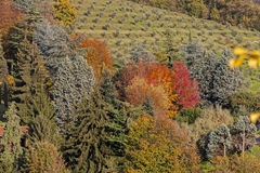 The warm color of autumn Royalty Free Stock Photography