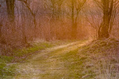 Warm colored forest lane stock images