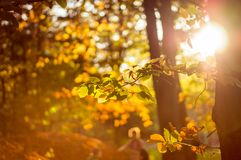 Warm colorful leaves with sunbeam Stock Images