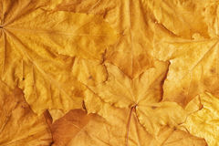 Warm colors of Autumn -Background Royalty Free Stock Image