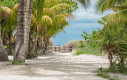 Warm and cozy tropical garden with white sand path leading to the beach Royalty Free Stock Photos