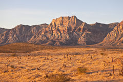 Warm Dawn Desert Light. In Nevada's Red Rock Conservation Area near Las Vegas Royalty Free Stock Photo