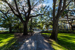 A Warm day at Forsyth Park in Savannah, Georgia Shaded by Magnolia Trees stock images