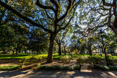 A Warm day at Forsyth Park in Savannah, Georgia Shaded by Magnolia Trees stock photography