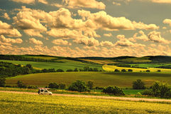 Warm de zomerlandschap Royalty-vrije Stock Afbeelding