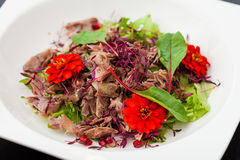 Warm duck salad Stock Image