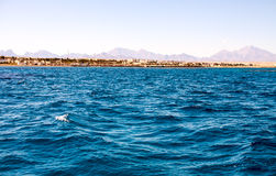 warm emerald water of the sea in Egypt royalty free stock photography