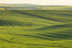 Warm evening light in green field royalty free stock photo