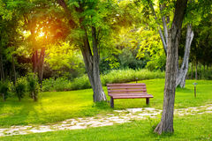 Warm evening in summer park Stock Photography