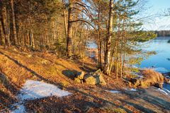 Warm sunlight in forest Stock Image