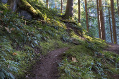 Warm Fall Air. Light flickers and dances along the Eaton Lake Trail, Fraser Valley, BC, Canada Stock Image