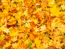Warm fall came. Stock Image