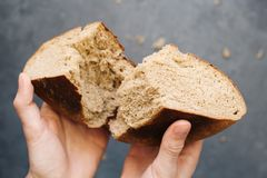 Warm, freshly rye bread. Cut the slices. Tear off a piece with your hands. Farm food made from flour and eggs. Royalty Free Stock Photos