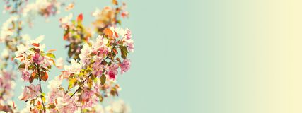 Warm gentle spring season wallpaper. Beautiful sunny day floral frame with blooming pink flowers branch. Soft light. Natural freshness springtime nature stock photos
