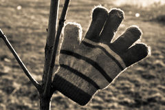 Warm glove Stock Images