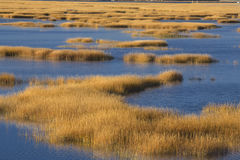 Warm glow of sunset on marsh at Milford Point, Connecticut. Abstract patterns at sunset of grasses in the fall marshes of the Charles E. Wheeler wildlife area stock images