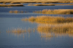 Warm glow of sunset on marsh at Milford Point, Connecticut. Stock Images