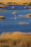Warm glow of sunset on marsh at Milford Point, Connecticut. Stock Photos