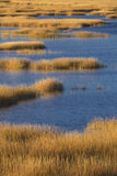 Warm glow of sunset on marsh at Milford Point, Connecticut. Stock Photography