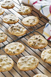 Warm homemade chocolate chip cookies cooling on wire racks Royalty Free Stock Photography