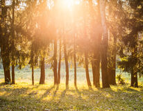 Warm, idealistic summer view sunset. Royalty Free Stock Images