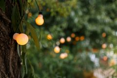 Warm light bulbs at the evening event. String wired with warming Light Bulbs hanging in the area of wedding events celebration in the night stock photo