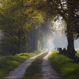 Warm light falling on a road in a dark forest Stock Image