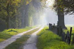Warm light falling on a road in a dark forest Royalty Free Stock Photo