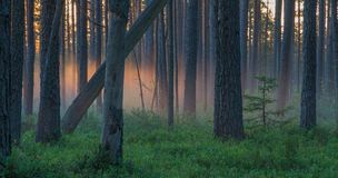 Warm light paints the fog in the forest Stock Photos