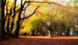 Warm magic woods. Autumn forest with warm atmosphere Stock Photos