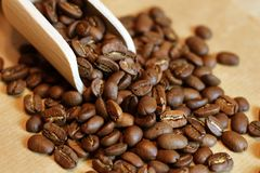 Warm mood of coffee beans. Stock Image