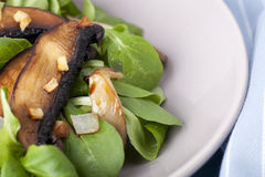 Free Warm Mushroom Salad Stock Photos - 15671483