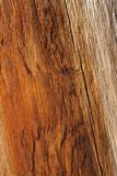 Warm orange color of wood. Cracked wood background, warm orange color royalty free stock photos