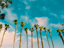 Warm Palm Trees Stock Images