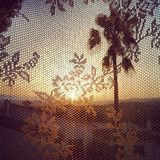 Warm Palms through Lace. Warm shot of palms though lace curtain, spain Royalty Free Stock Images